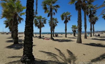 Strand Ponent